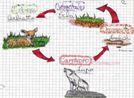 disegno catena alimentare