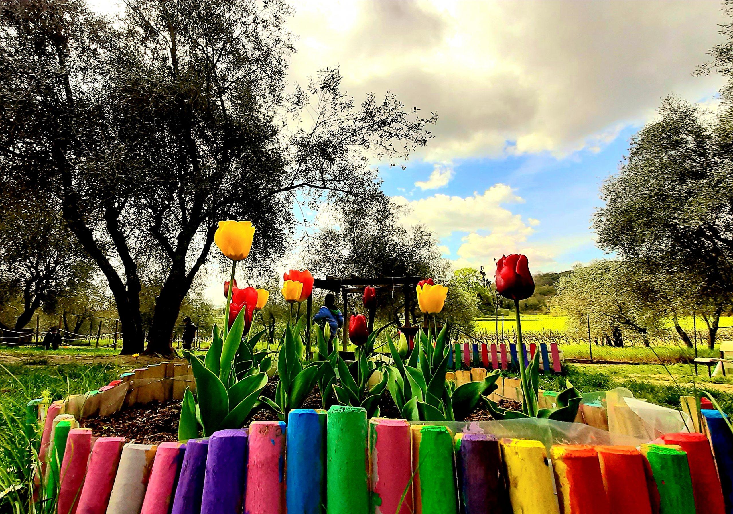 foto fiori in un recinto colorato