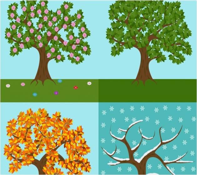 Immagine alberi in ogni stagione