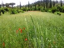 foto campo di grano
